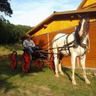 Sunny Hill Ranch